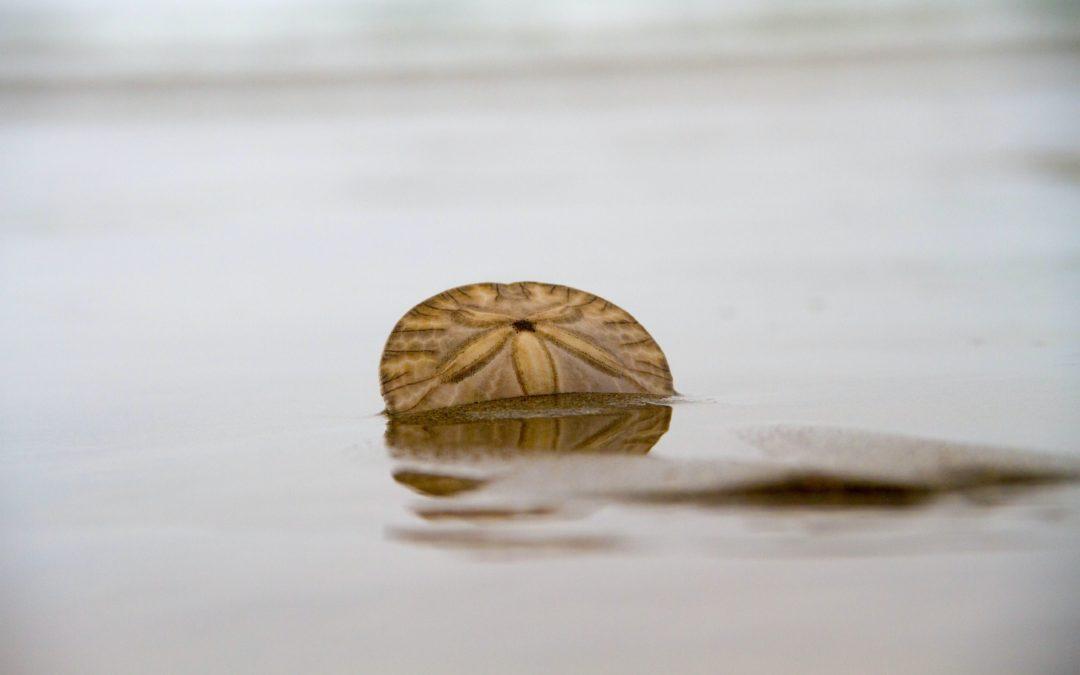 Le Dollar des sables
